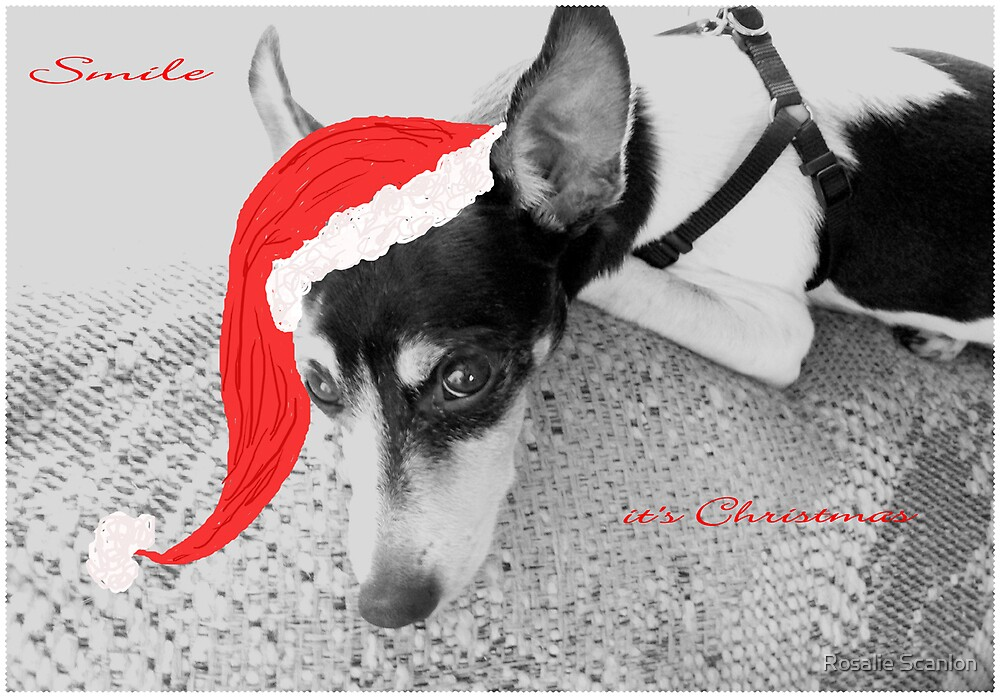 Buddy - A Christmas Card by Rosalie Scanlon