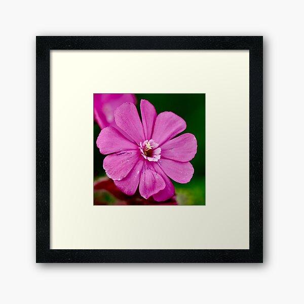 NDVH Flowers 5 Framed Art Print