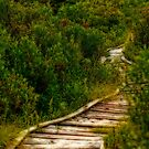 wooden path by Manon Boily