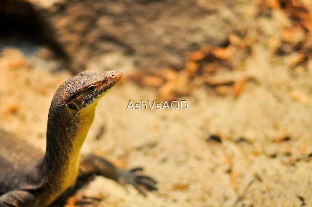 Curious lizard by AshVsAOD