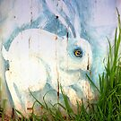 White Rabbit by malcblue