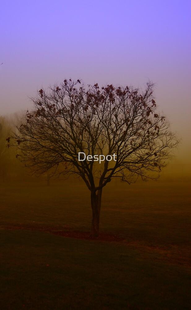 Purple Haze by Despot