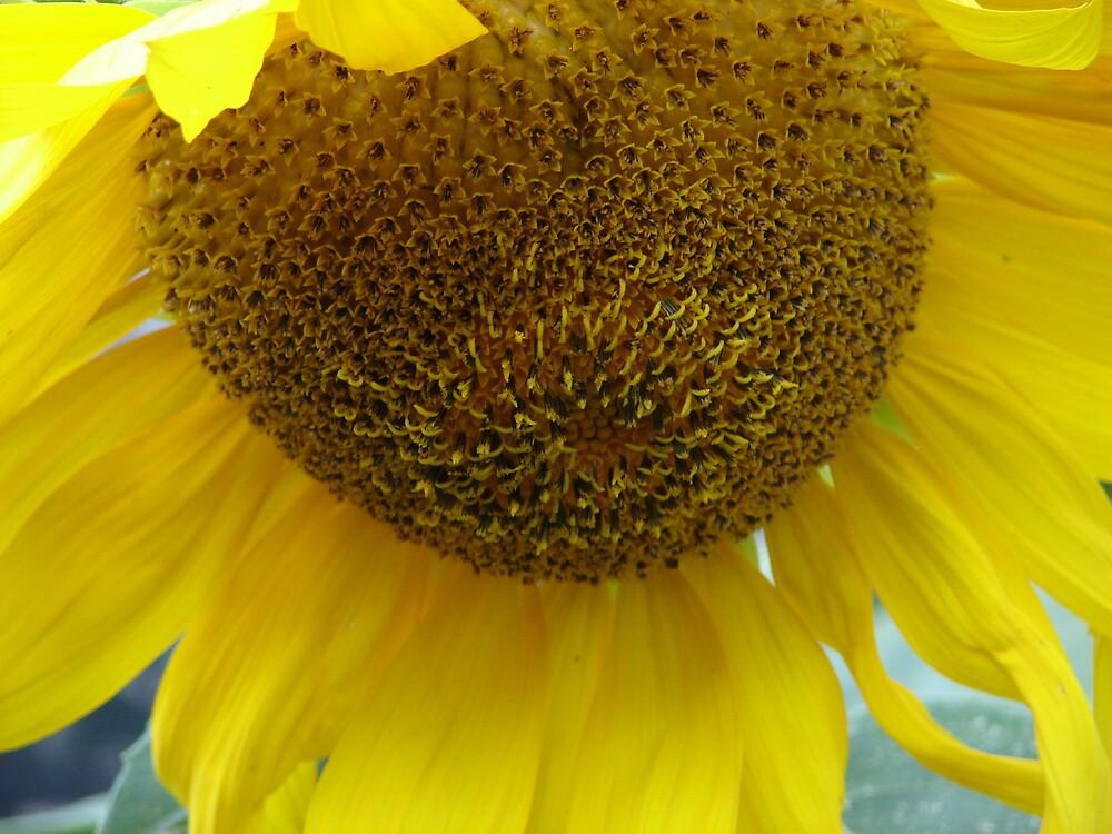 Seeds... by Glen Baker