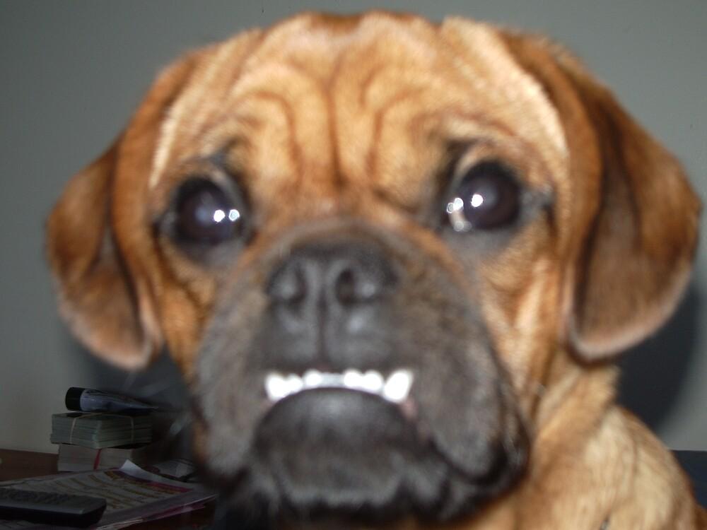 cutest ugly by Megan Parr