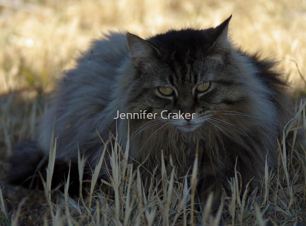 Mintie - Old Tabby by Jennifer Craker