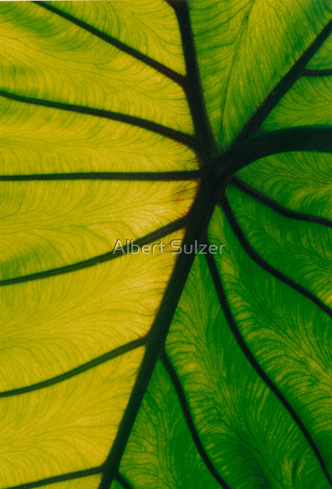 Abstract Art -7 by Albert Sulzer