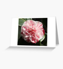 Rasberry Ripple - Camelia Greeting Card