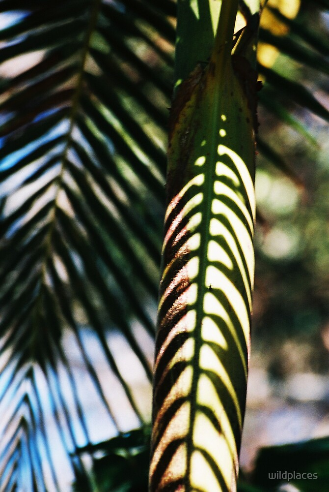 palm shadows by wildplaces