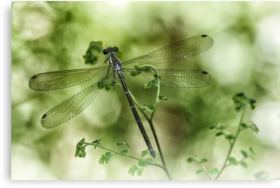 A tiny one hidden in the green by the pond by Clare Colins