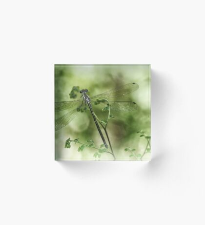 A tiny one hidden in the green by the pond Acrylic Block