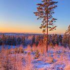 December morning 3 by Veikko  Suikkanen
