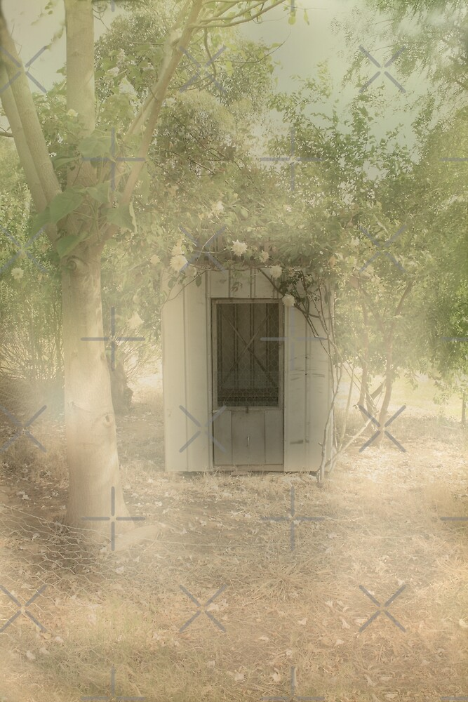 The Old Chook Shed by Elaine Teague