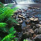 Halcyon Flow, Dip River Forest Reserve TAS by Chris Munn