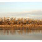 Tree Lake by danabee