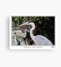 Japanese Grey Heron (Ardea cinerea) Canvas Print