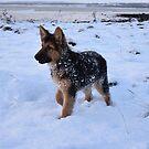 Pretty puppy by nikki harrison