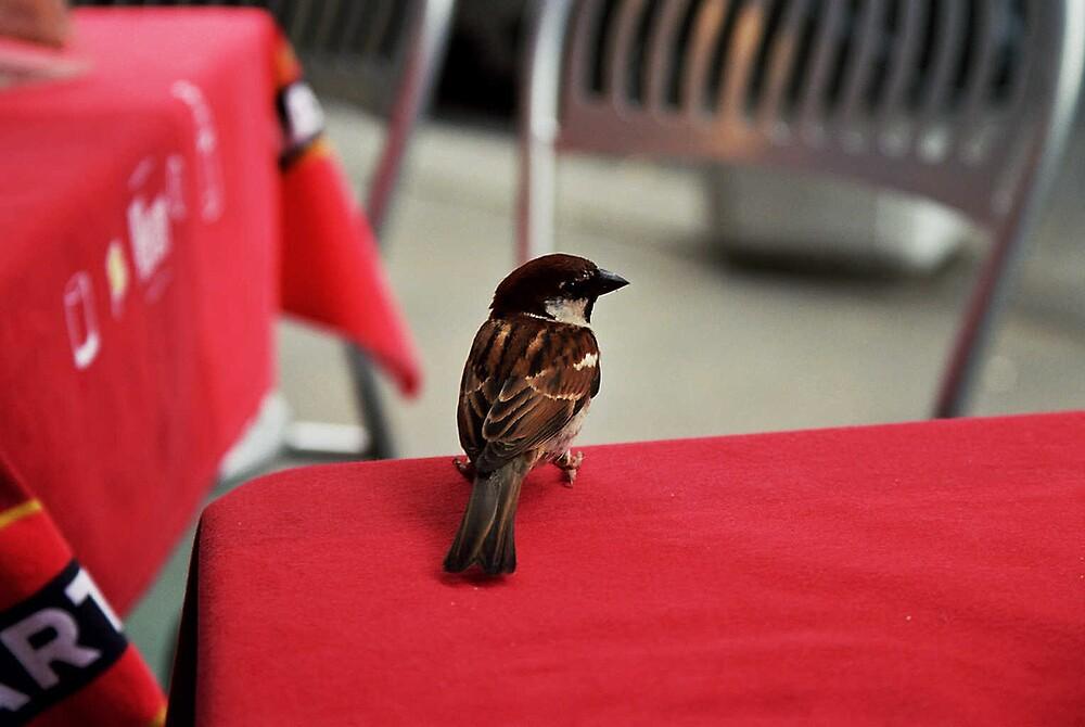 Sparrow in Rome by Robert Burton
