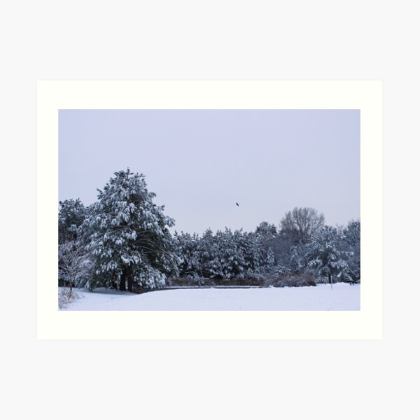 A wintry morning by the pond Art Print