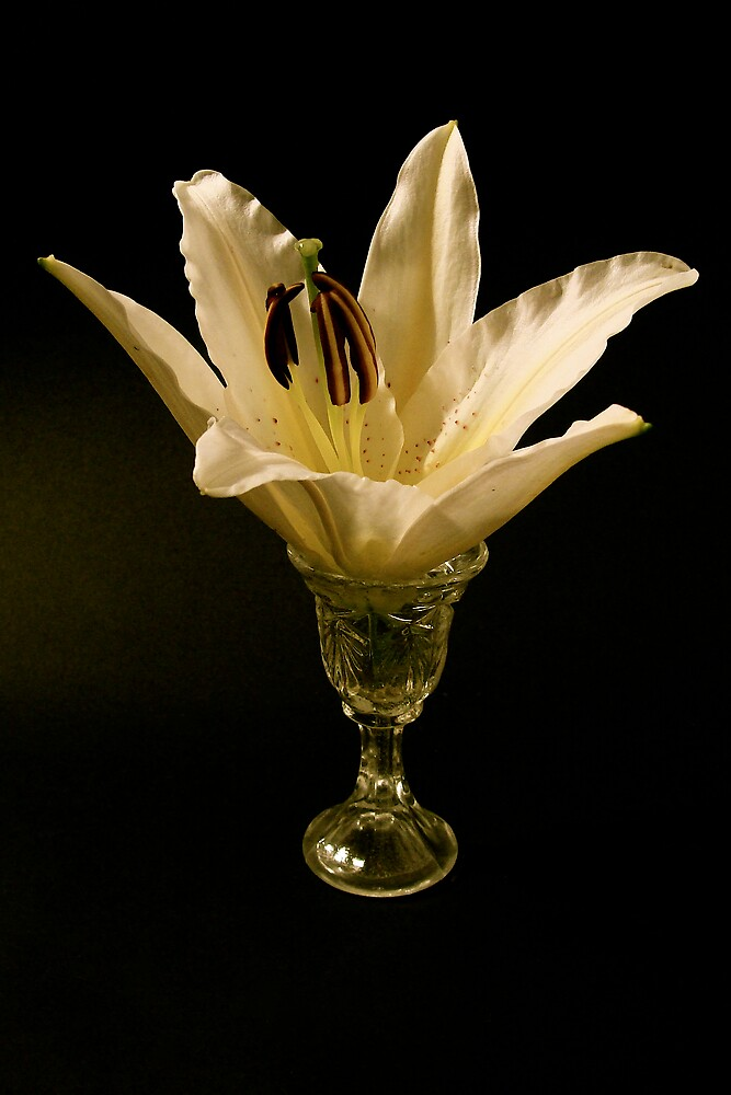 Lily in the glass .... by anisja