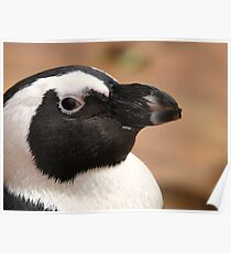 Young Penguin Profile Poster