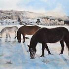 Highland Ponies by Mike Paget