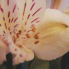 In a Bouquet by Diane Petker