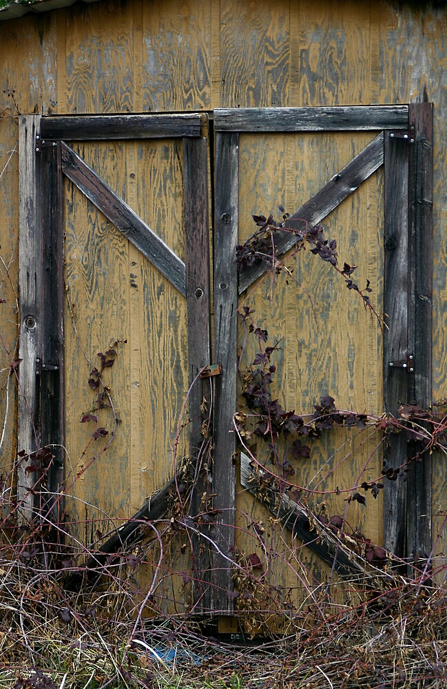 Shed Door by RolandTumble