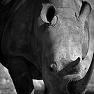 Rhino head to head by Wild at Heart Namibia