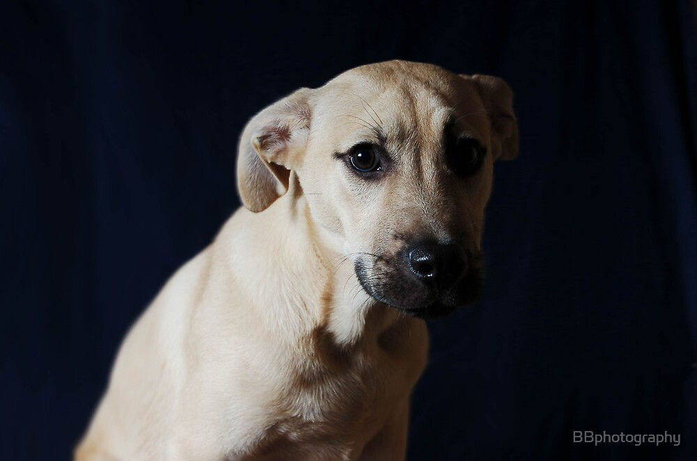 Sad Dog by BBphotography