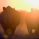 Rhinos at sunset by Wild at Heart Namibia