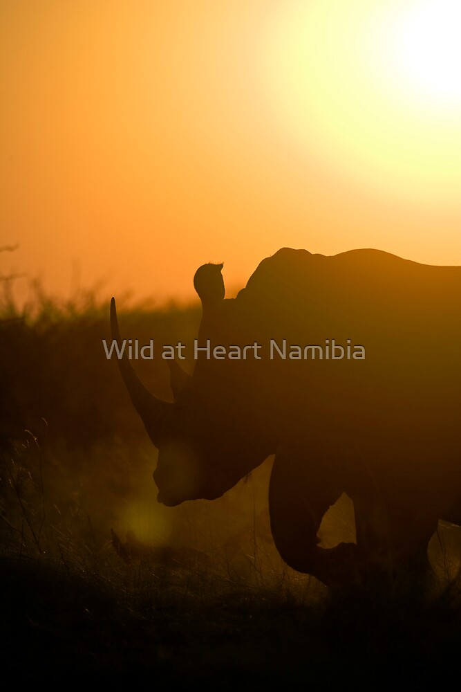 Rhino at sunset by Wild at Heart Namibia