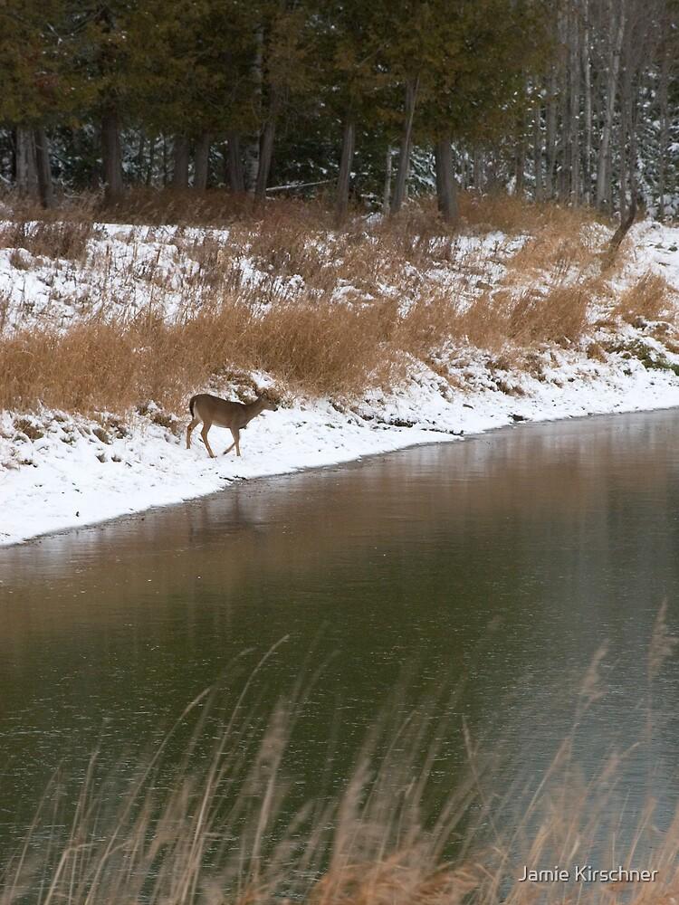 Deer at Pond by Jamie Kirschner