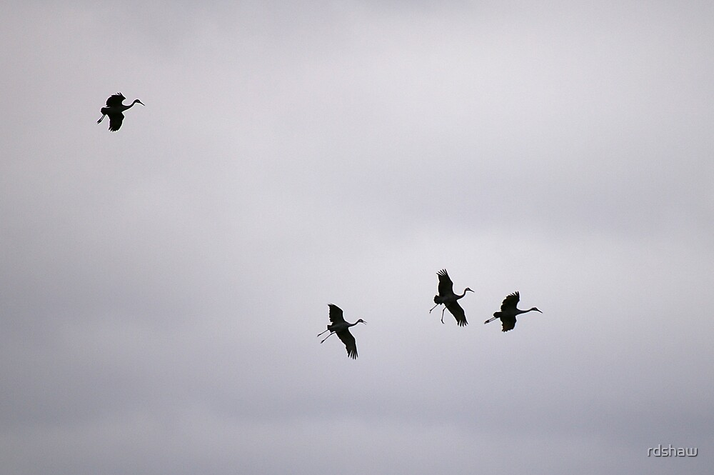Cranes Flying 7 by rdshaw