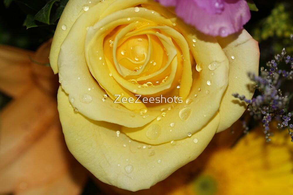 Raindrops on my Yellow Rose by ZeeZeeshots