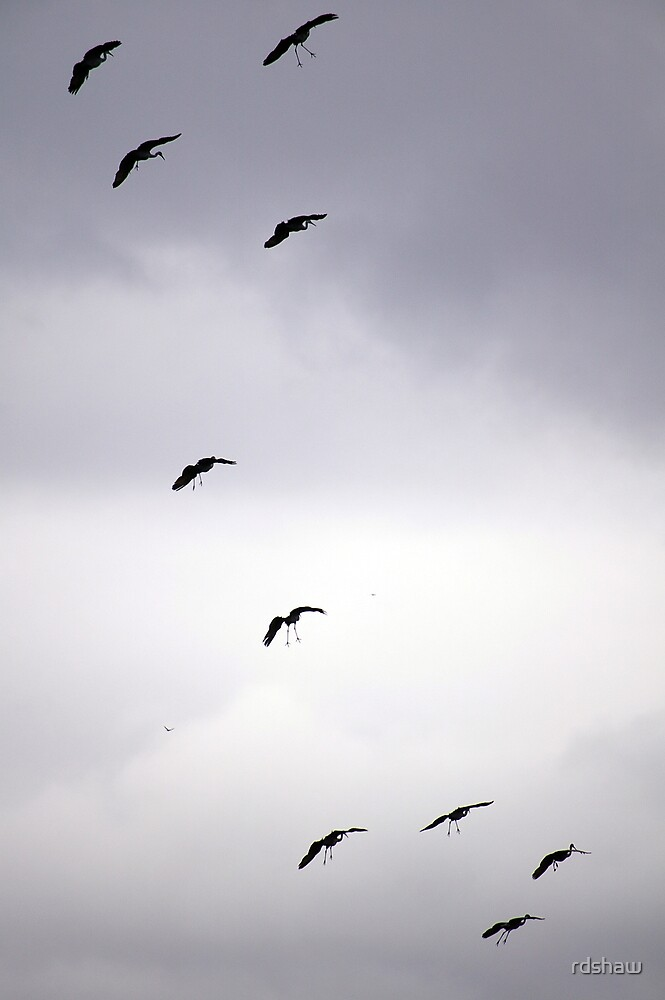 Cranes Flying 12 by rdshaw