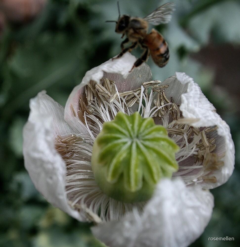 Poppy & Bee by rosemellen
