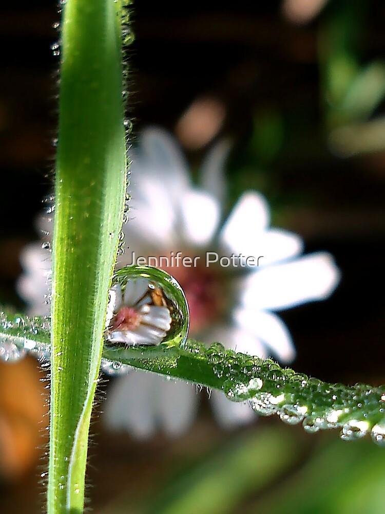 Dew Drop Daisy by Jennifer Potter