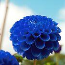 Blue by MariaVikerkaar