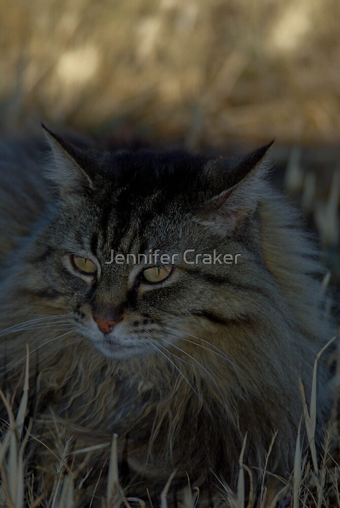 Mintie - Our Old Girl by Jennifer Craker