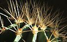 Prickly Pair - Two by George Parapadakis (monocotylidono)