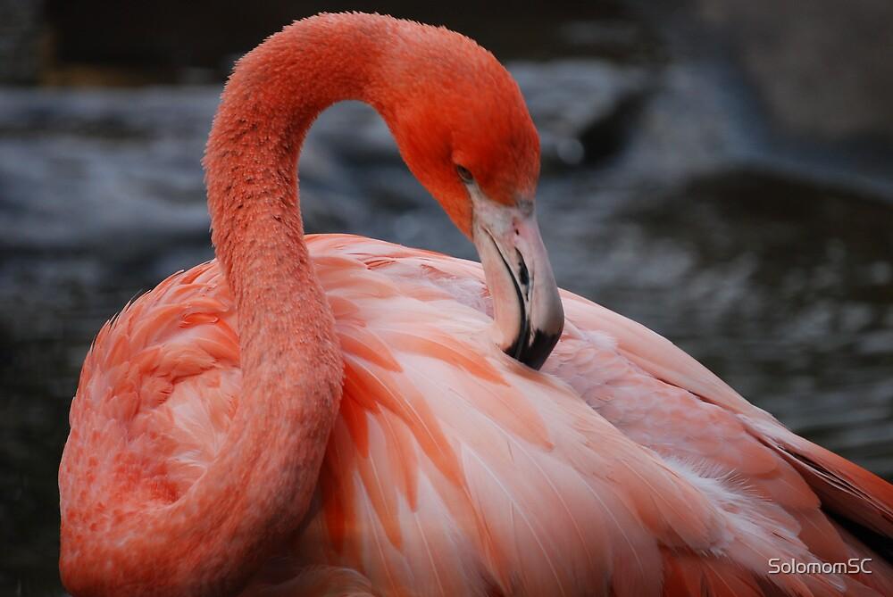 Flamingo by SolomomSC