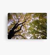 Autumn dusk under the trees Canvas Print