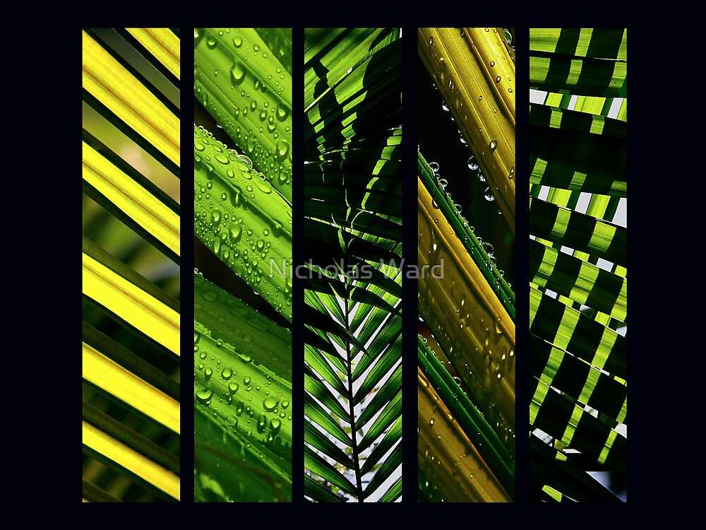 Nature's Sunblinds I by Nicholas Ward