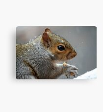 Yum! Frosted Peanuts! Canvas Print