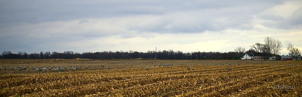 Indiana Farm with Cranes by rdshaw