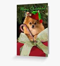 Merry Christmas Pomeranian Elf  Greeting Card
