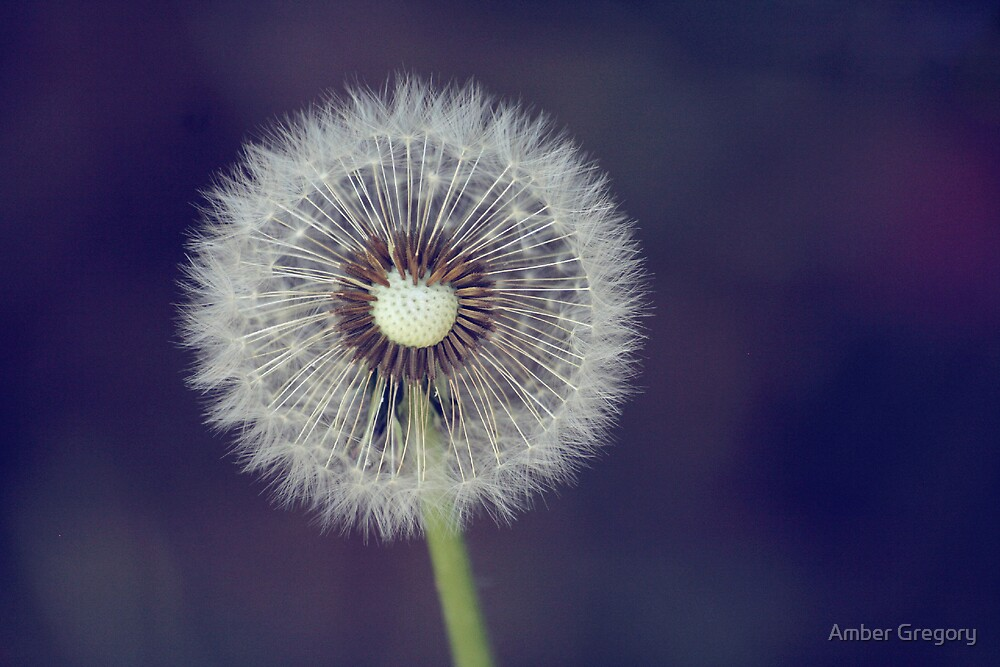 The answer, my friend, is blowin' in the wind by Amber Gregory