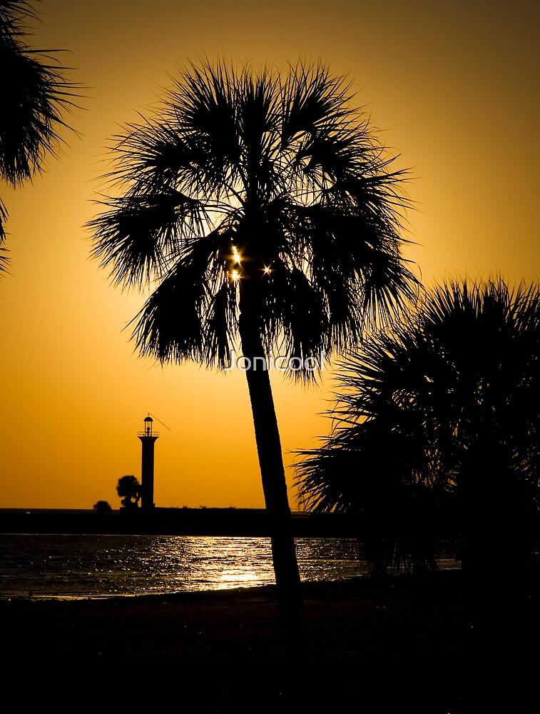 Palm Sunset by Jonicool