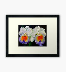 Double Orchids Framed Print