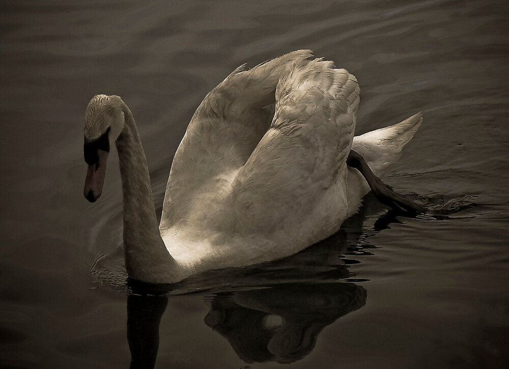Swan Lake. by mariarty